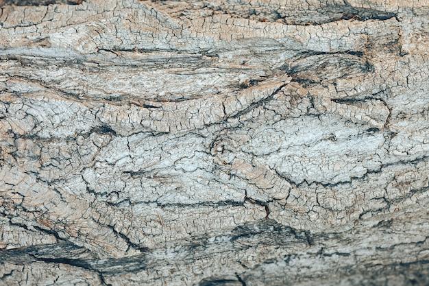 Strukturierter grauer baumrindehintergrund. hölzerner hintergrund