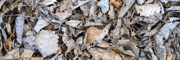 Strukturierter hintergrund des trockenen verwelkten gefallenen herbstlaubs der baumhaufen