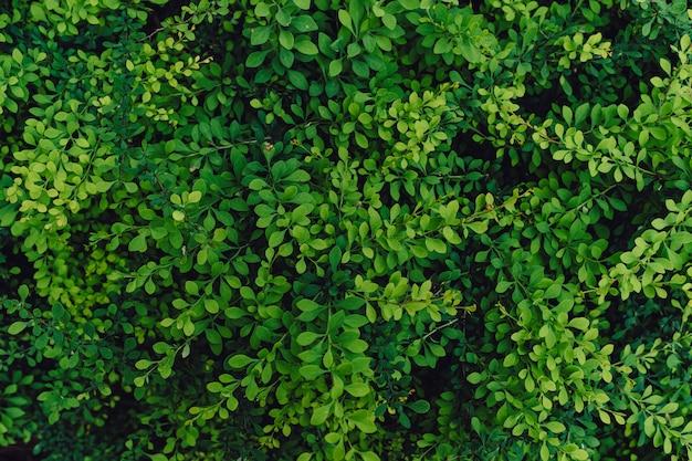 Strukturierter natürlicher hintergrund vieler grüner blätter