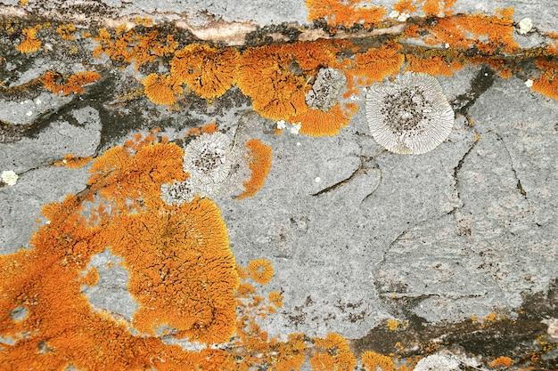 Strukturierter stein der natürlichen umwelt mit hellgelbem moos- und flechtenhintergrund in der natur