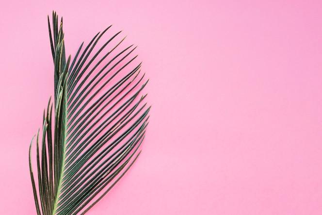 Strukturiertes blatt auf rosa
