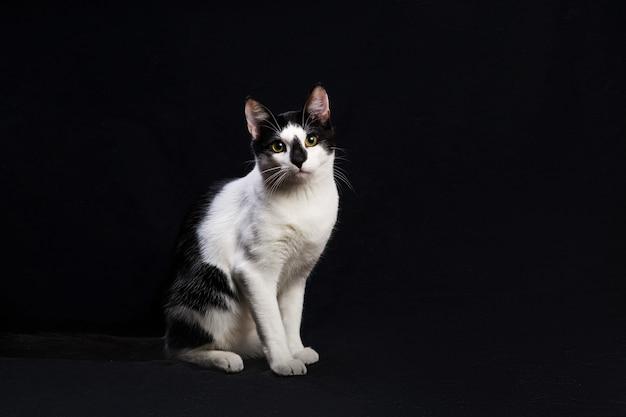 Studioaufnahme einer schwarzen und weißen katze, die auf schwarzem hintergrund sitzt