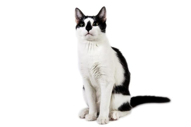 Studioaufnahme einer schwarzen und weißen katze, die auf weißem, isoliertem hintergrund sitzt
