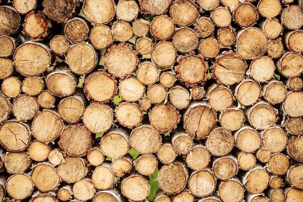 Stücke von teakholzstumpfhintergrund. runder teakholzstumpf. runde teakholzbäume umkreisen stümpfe geschnittene gruppe. abholzung.