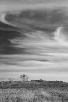 Stürmische landschaft mit schweren wolken und dem baum