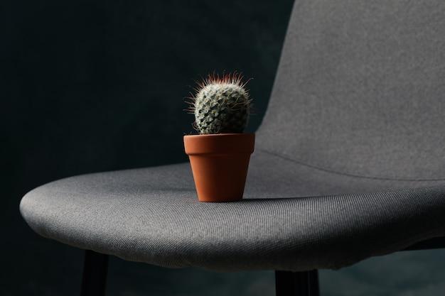 Stuhl mit kaktus im dunklen raum. hämorrhoiden