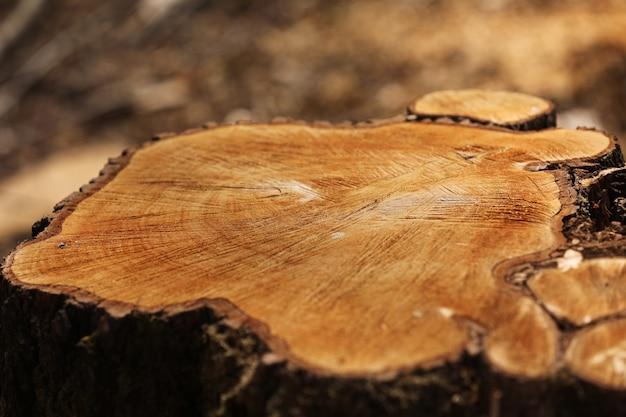 Stumpf von einem geschnittenen baum. kiefernforstwirtschaft an einem sonnigen tag. übernutzung führt zu entwaldung, die die umwelt und die nachhaltigkeit gefährdet. abholzung, selektiver fokus
