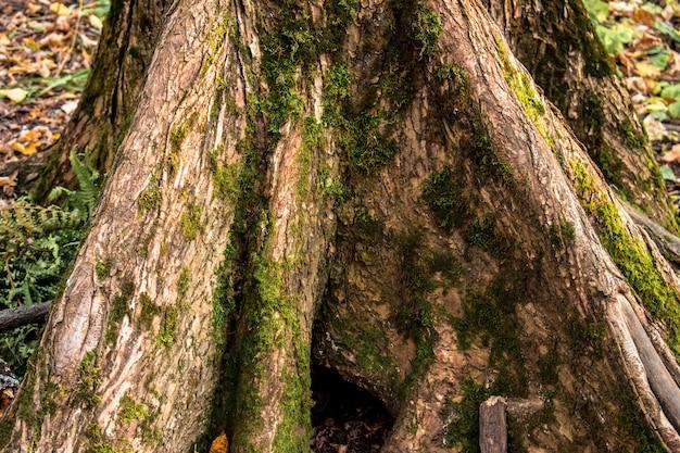 Stumpf-wald verlässt beschaffenheitshintergrund-hintergrundherbst