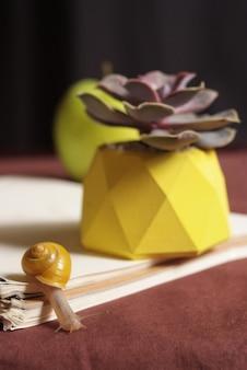 Succulents im gelben konkreten topf auf tabelle mit kleiner schnecke nahe apfel und notizbuch. makro nahaufnahme