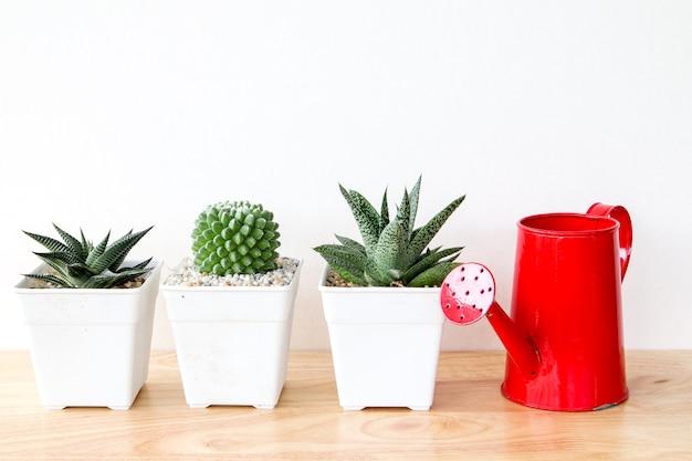 Succulents oder kaktus in den betontöpfen über weißem hintergrund im regal und verspotten herauf rahmenfoto