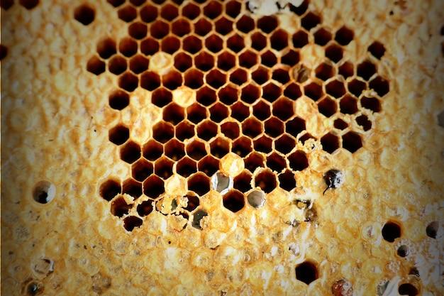 Süße bienenwabenhintergrundbeschaffenheit