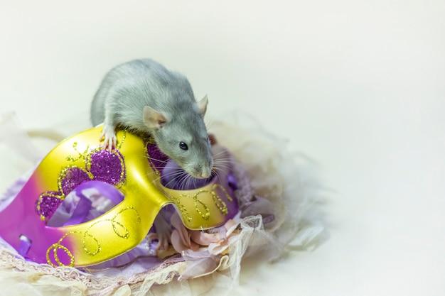 Süße dumbo-ratte sitzt auf einer karnevalsmaske isoliert auf einem weißen