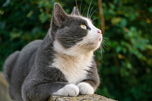 Süße graue katze auf der niedrigen mauer