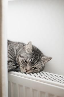 Süße graue katze, die sich zu hause auf dem warmen heizkörper entspannt