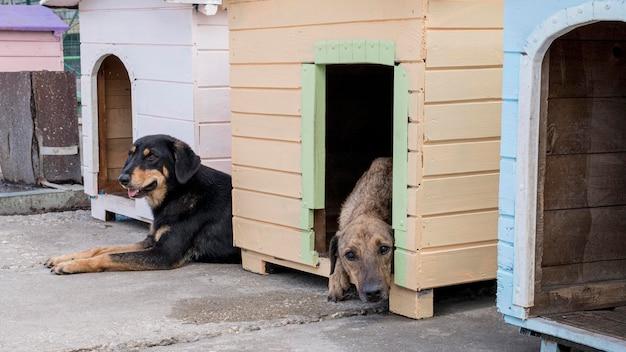 Süße hunde in ihren häusern warten darauf, adoptiert zu werden