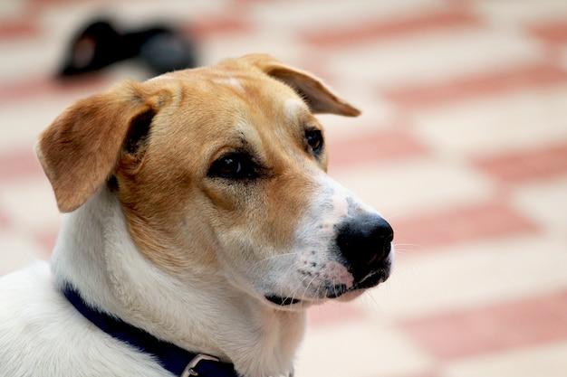 Süße hunde Premium Fotos