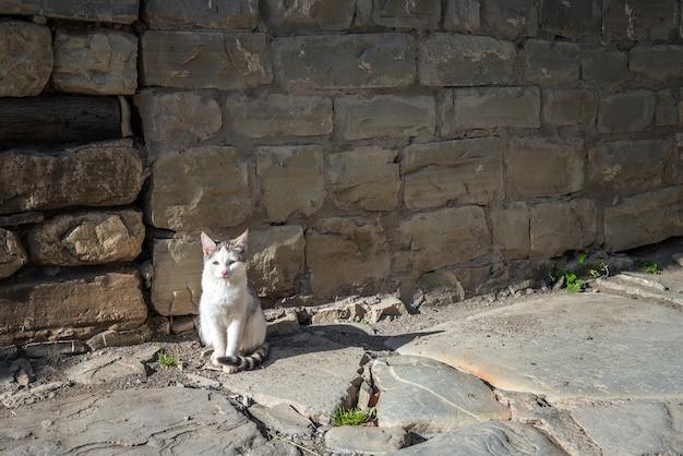 Süße katze auf der straße