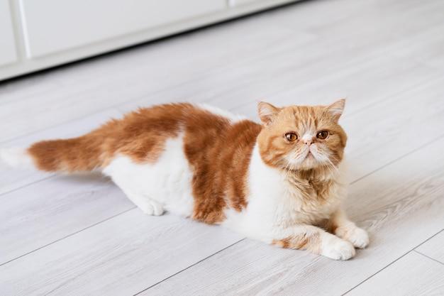 Süße katze, die auf dem boden liegt