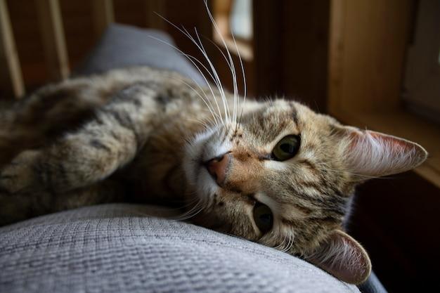 Süße katze, die auf dem sofa ruht