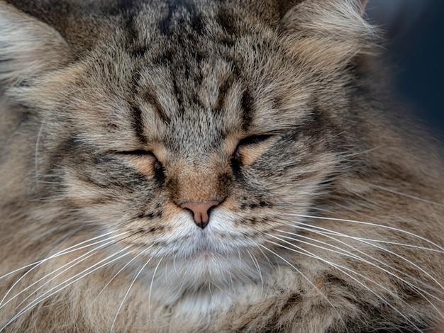 Süße katze ist eine geschlossene katze, die auf dem boden liegt