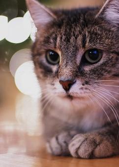 Süße katze mit weihnachtsbeleuchtung