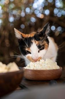 Süße katze riecht käse aus schüssel