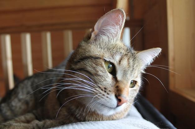 Süße katze schaut aus dem fenster