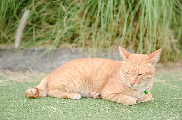 Süße katze schlafen auf grünem teppich