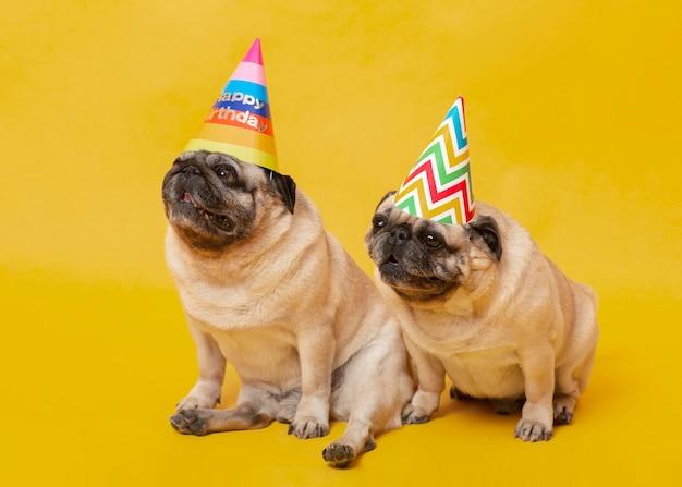 Süße kleine hunde, die einen geburtstag feiern