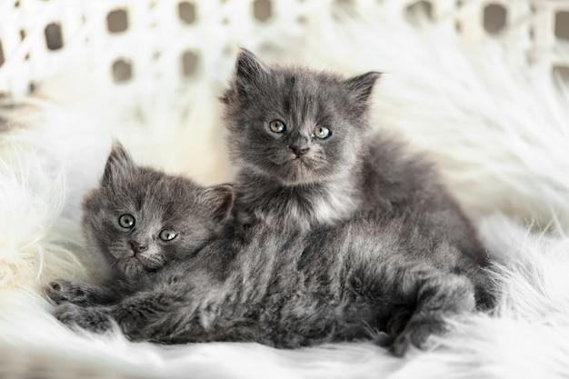Süße kleine kätzchen auf weichem plaid