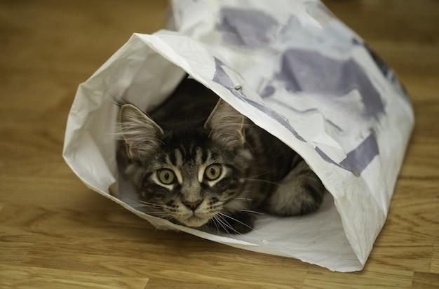 Süße lustige kleine hauskatze, die zu hause spielt und sich in einem plastikpaket versteckt