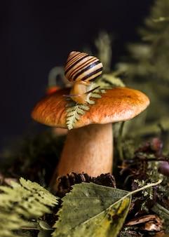 Süße schnecke mit gestreifter schale kriecht um große steinpilze herum, die durch moos und laub im wald wachsen