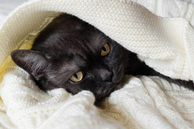 Süße schwarze katze schläft mit warmer decke bedeckt