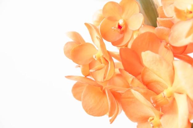 Süße und pastellfarbene blume, weiches und verschwommenes fokusfoto im weinlesestil
