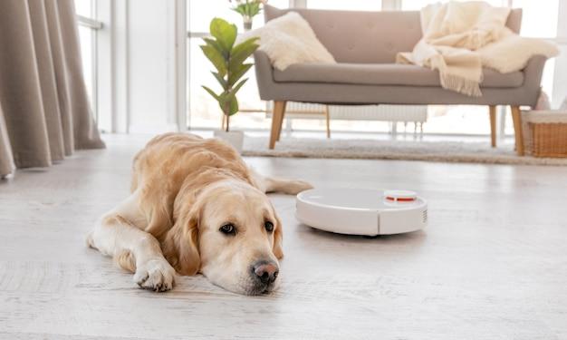 Süßer golden retriever hund, der zu hause auf dem boden liegt, während der roboterstaubsauger in seiner nähe arbeitet