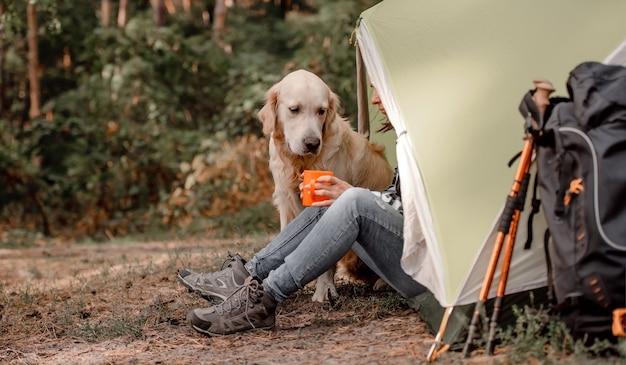 Süßer golden retriever hund sitzt auf dem campingplatz im wald in der nähe des zeltes mit seinem besitzer, der tee trinkt