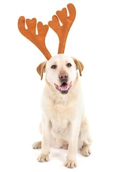 Süßer hund im kostüm, isoliert auf weiß