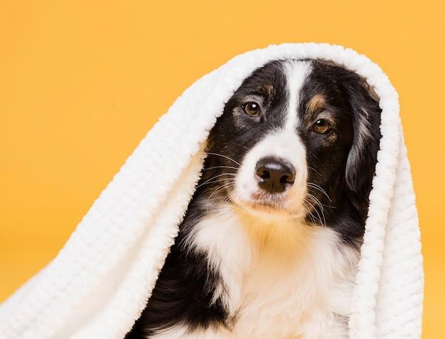 Süßer hund mit einem handtuch