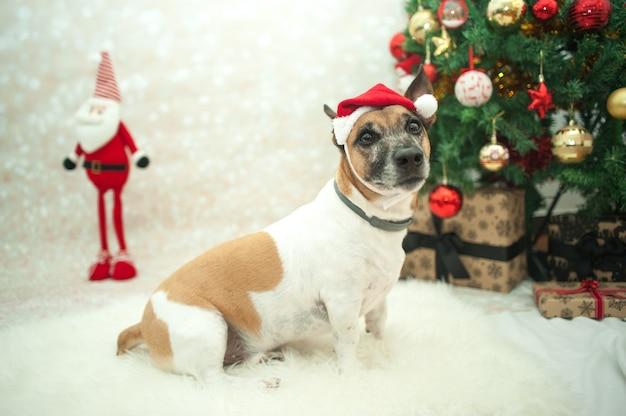 Süßer hund mit weihnachtsmütze im zimmer für weihnachten dekoriert