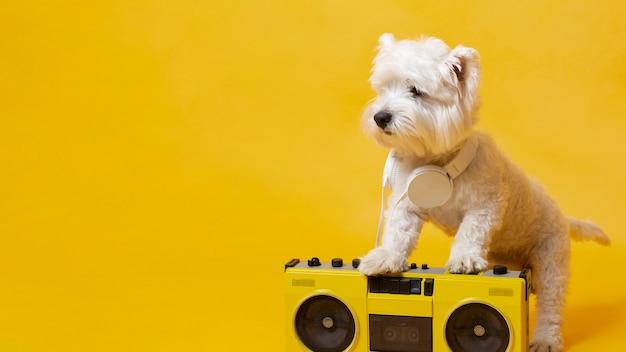 Süßer kleiner hund mit kassettenspieler