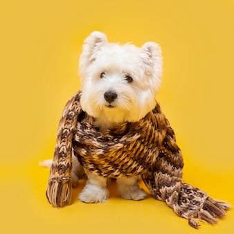 Süßer kleiner hund mit winterschal
