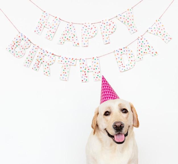 Süßer labrador retriever mit partyhut auf einer geburtstagsfeier