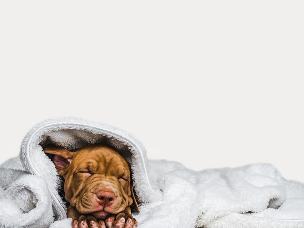 Süßer welpe, der auf einem weichen plaid schläft