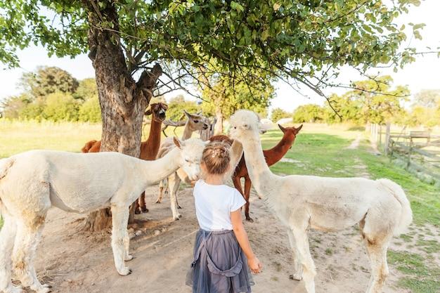 Süßes alpaka mit lustigem gesicht, das sich am sommertag auf der ranch entspannt. inländische alpakas, die auf der weide in der natürlichen öko-farm weiden lassen, landschaftshintergrund. konzept für tierpflege und ökologische landwirtschaft