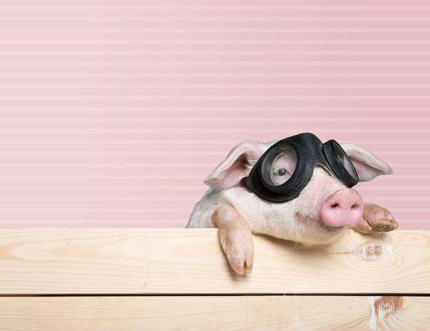 Süßes ferkeltier in fliegerbrille, das an einem zaun hängt