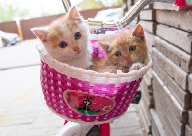 Süßes kätzchen im fahrradkorb