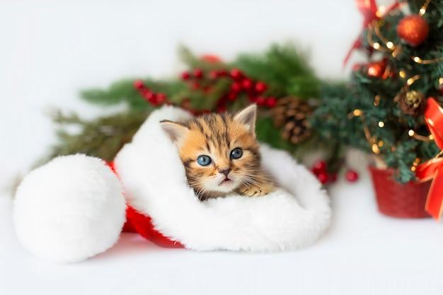 Süßes kätzchen in einer weihnachtsmannmütze