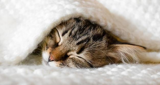 Süßes kätzchen schläft auf einem weißen bett unter einer strickdecke.
