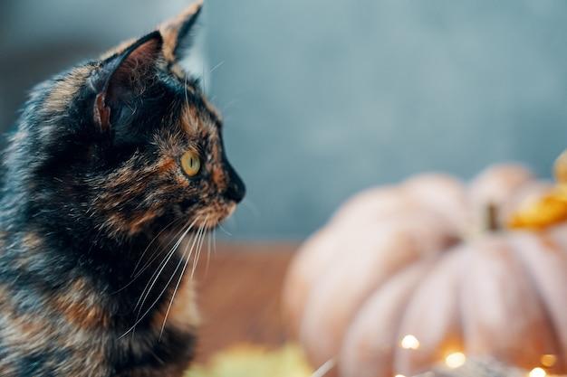 Süßes kätzchen und kürbis