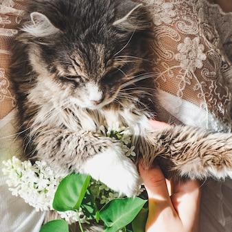 Süßes kätzchen und schöner zweig der flieder